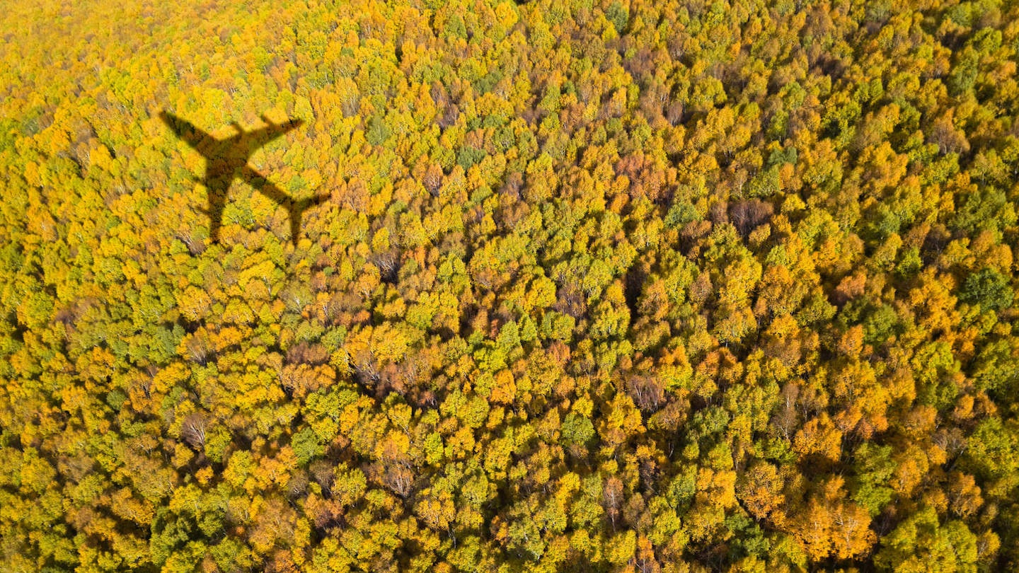 Airplane flying over a bright green forest